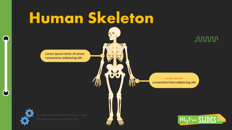 Human Skeleton Presentation Slide