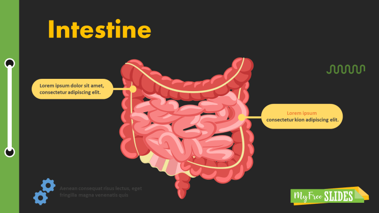 Human Intestine Slide Background