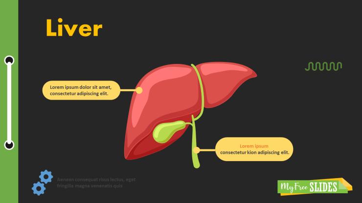 Liver Presentation Slide