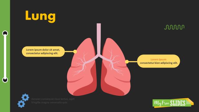Lungs Presentation Slide