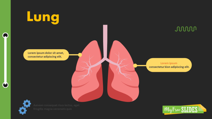 Lungs Presentation Slide