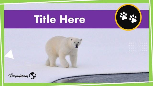 Free Polar Bear Google Slides Themes