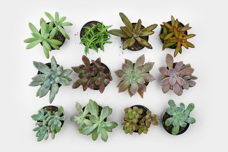 Recommended Succulents For Your Wall Garden