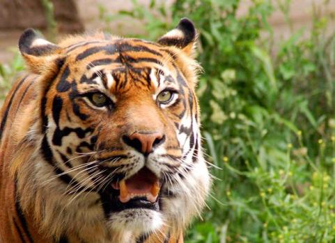 wild animal lesson plans