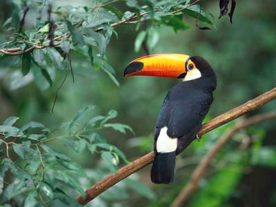 rainforest bird