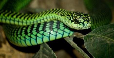 snake lesson plans