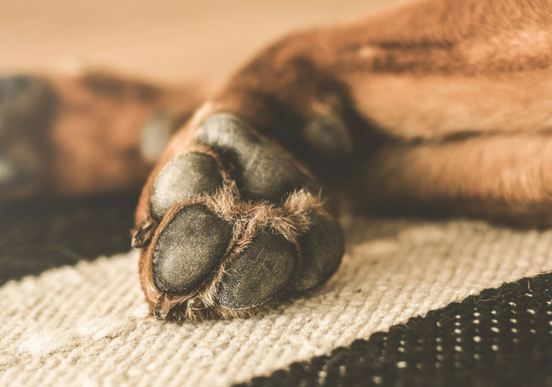 How to Stop a Dogs Nail from Bleeding
