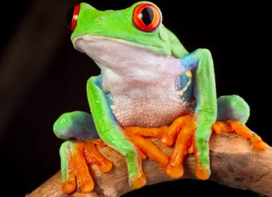 How to Care Frogs and Toads