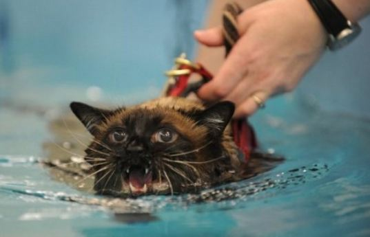 Why do Cats Not Like Water