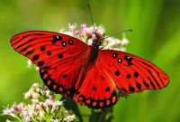 More Information About Butterfly