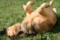 How to Stop a Dog from Rolling in Poop