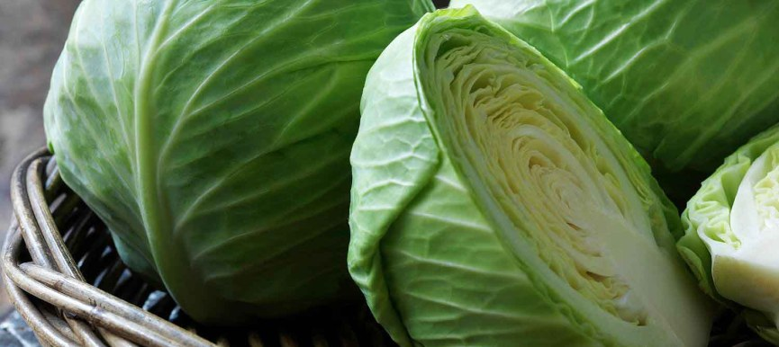 Cabbage - বাঁধাকপি - F1 Hybrid - 2000 to 2800 Seeds - Commercial Pack