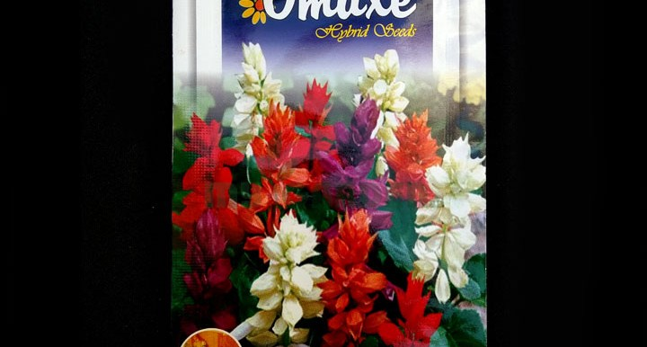 Salvia Mixed F1 Hybrid – (50 seeds) – Omaxe - Indian