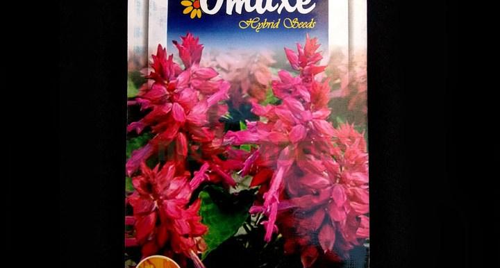 Salvia Pink – (50 seeds) – Omaxe - Indian