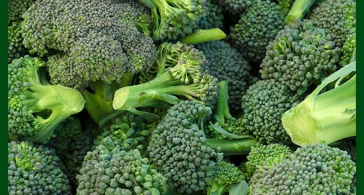 -Broccoli - F1 Hybrid Seeds - (2900 to 3100 seeds) - Commercial Pack