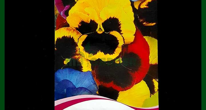 Pansy Mixed Color - Chinese