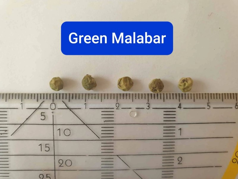 Green malabar pepper