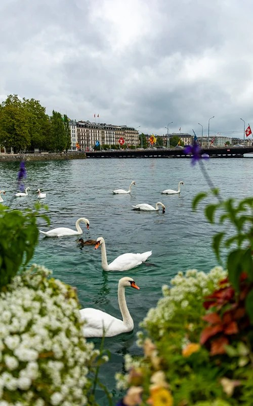 Lake Geneva is one of the most beautiful places in Switzerland.