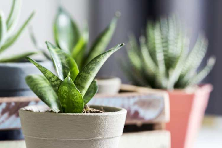 planten natuurlijke luchtzuiveraars