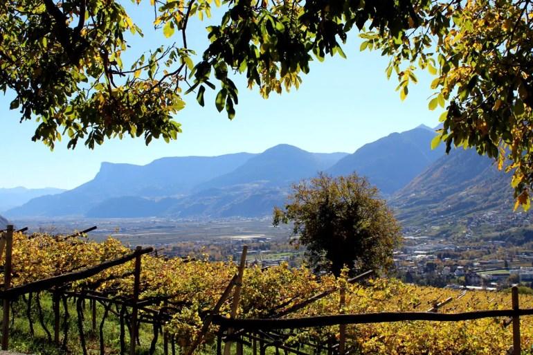 Goldener Oktober: Vom Weinberg bietet sich ein wunderschöner Blick über die Weinreben und das Etschtal