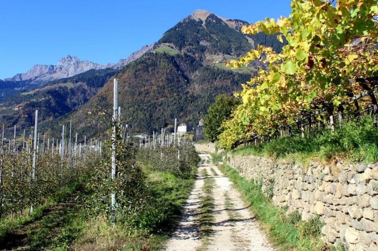 Auf dem Weinweg in Dorf Tirol: rechts die Weinberge, links die Apfelbäume und am Horizont das Schloss Tirol