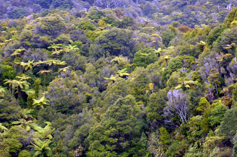 Die Westküste der Südinsel ist von Regenwald überzogen
