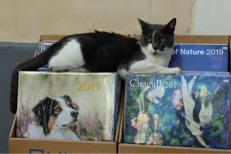 Einfach mal Pause machen: die Katze gehört zum Inventar der Buchhandlung