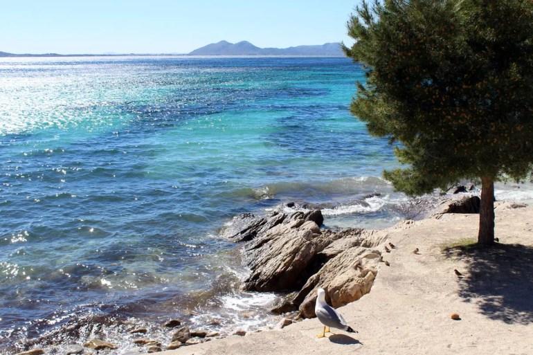 Im Frühjahr herrscht an der Playa de Formentor noch herrliche Stille