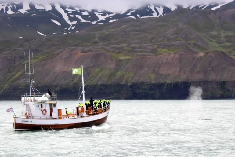 Im Hintergrund der Gletscher, vorne die Eislagune und eine Robbe