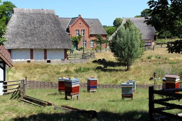 Einige Bienenvölker haben im Freilichtmuseum Schwerin-Mueß ihr Zuhause