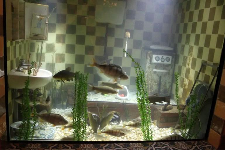 Fische im Badezimmer gibt's im Aquarium
