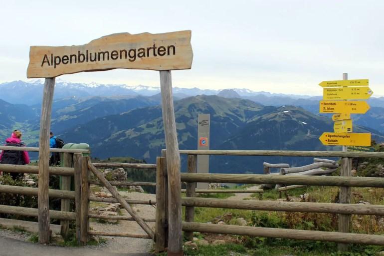 Der Alpenblumengarten zeigt Pflanzen aus den verschiedenen Bergregionen