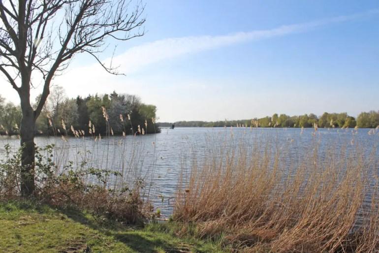 Im Naturschutzgebiet Die Reit fließen Dove Elbe und Gose Elbe zusammen