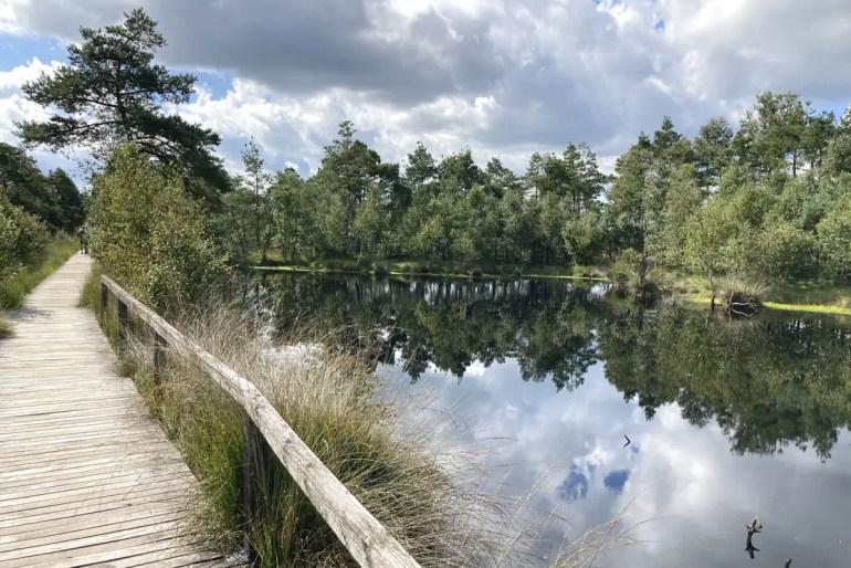 Ein Besuch im Pietzmoor gehört auch zum Ausflug in die Lüneburger Heide