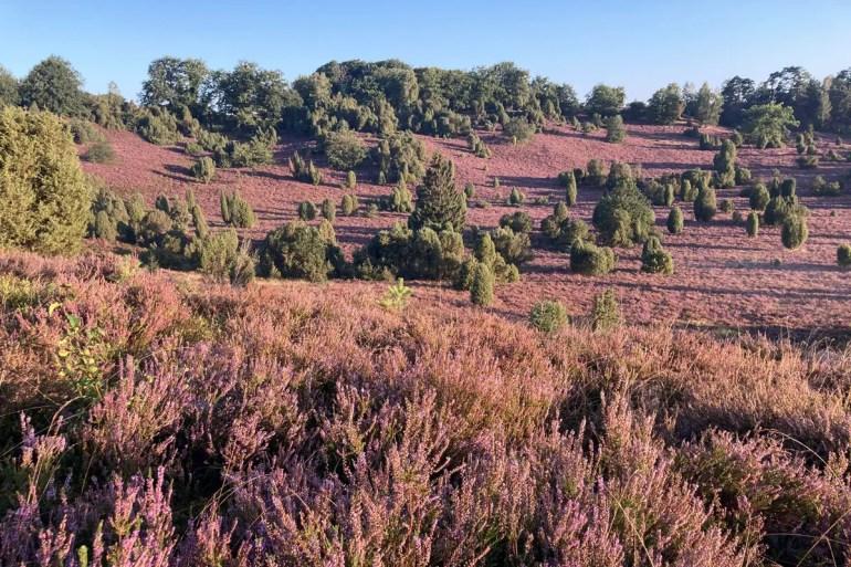 Einer der schönsten Orte in der Lüneburger Heide: der Totengrund zur Heideblüte