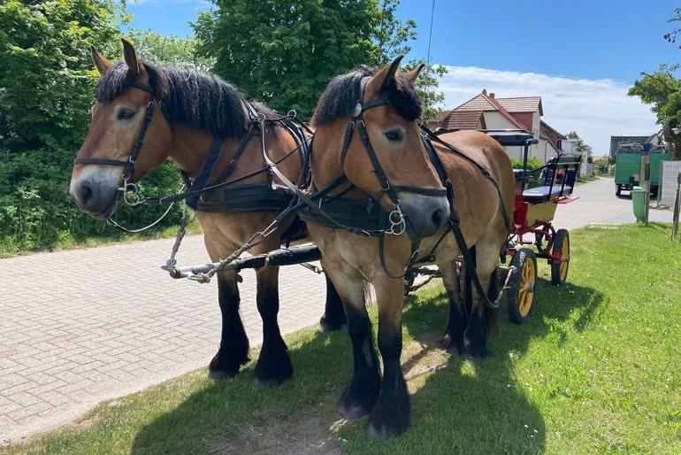 Autos gibt es auf Hiddensee keine, dafür Pferdekutschen und einen Inselbus