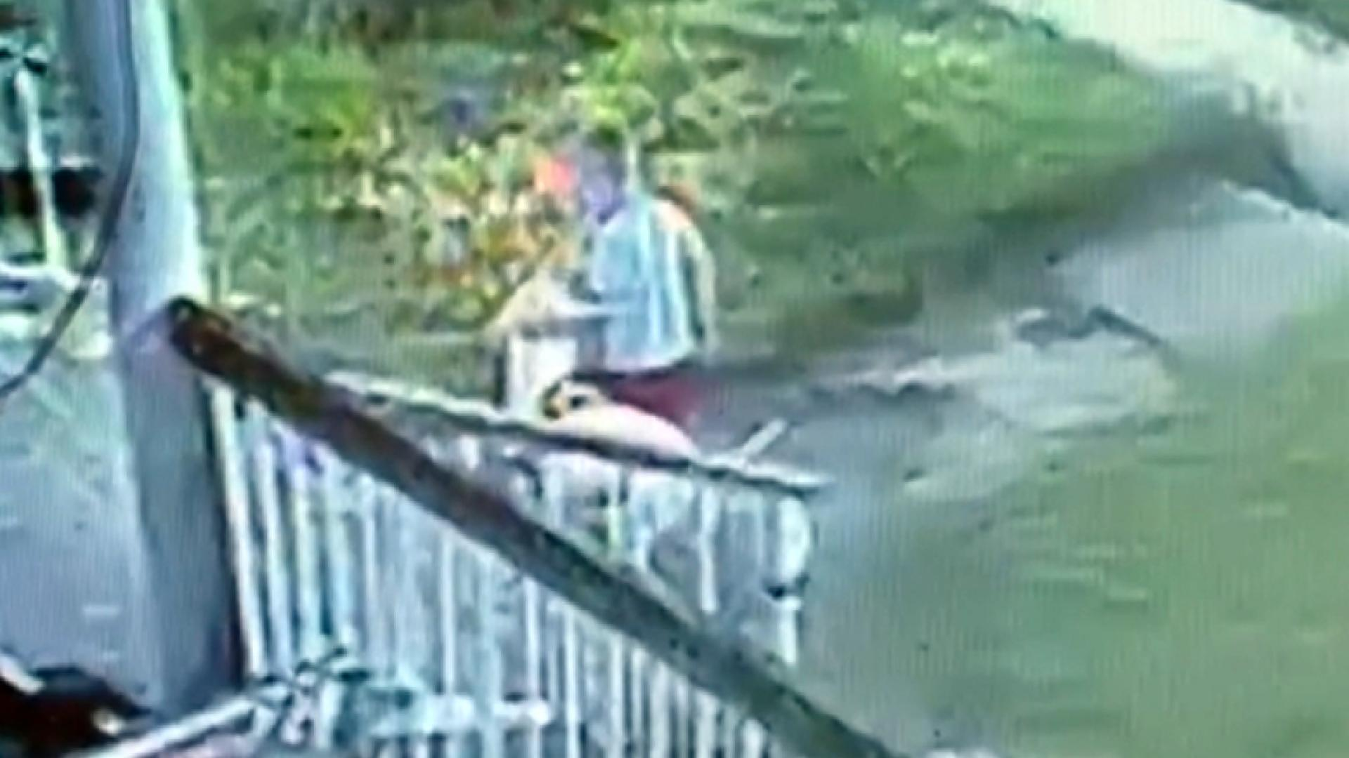 Dog Owner Hides Pitbull After Mauling