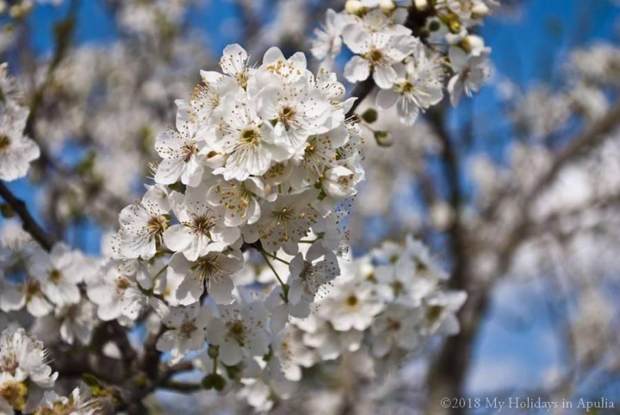 Springtime in Apulia