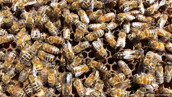 Can you spot the queen?