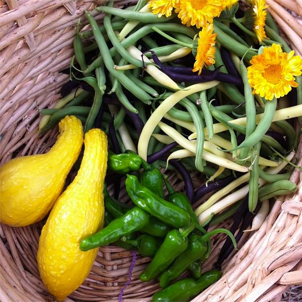 The Harvest Season Has Begun | myhumblekitchen.com