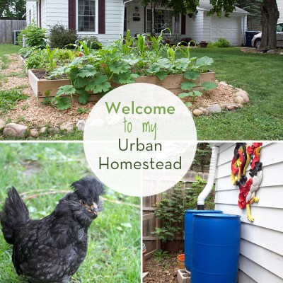 A Tour of My Urban Homestead