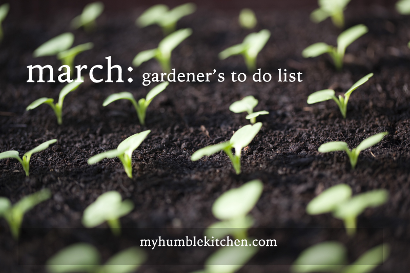 March Gardener's To Do List – Zone 5