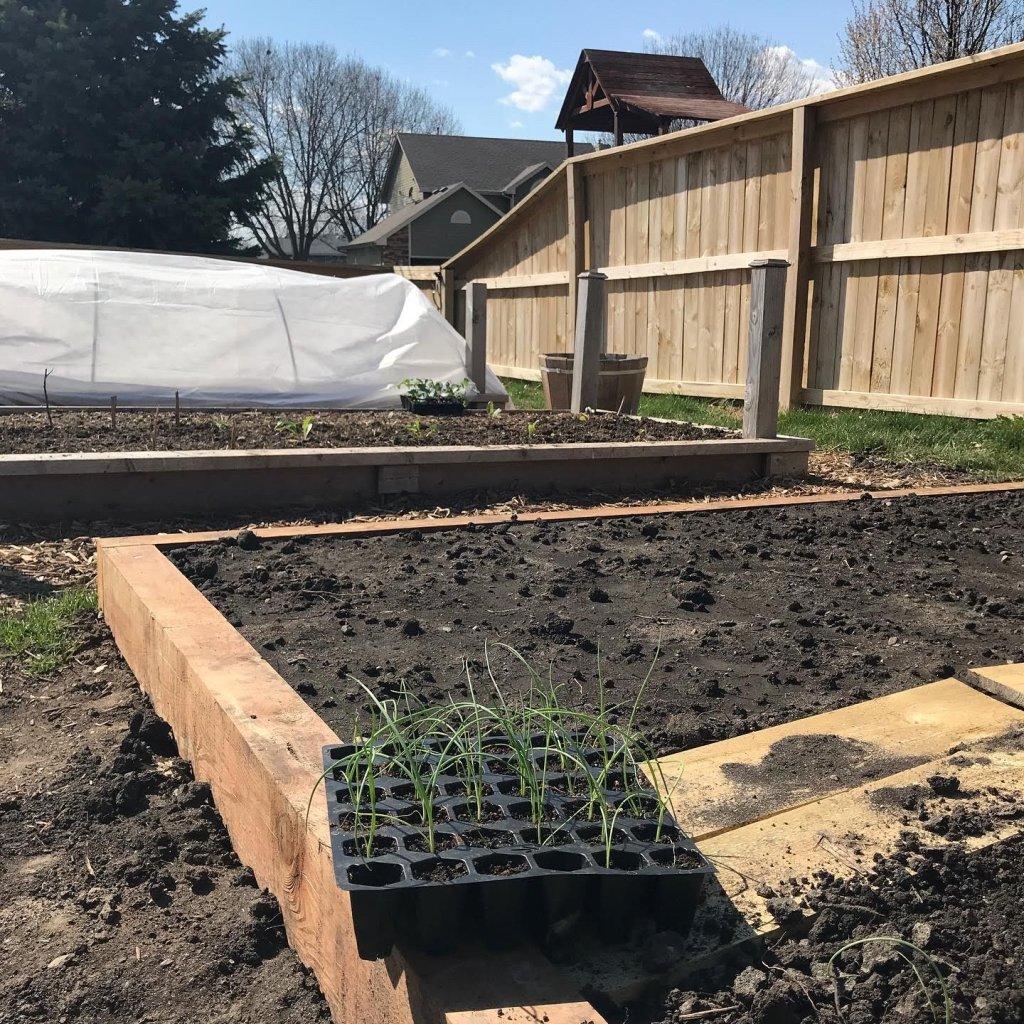 urban homestead, organic gardening | myhumblekitchen.com