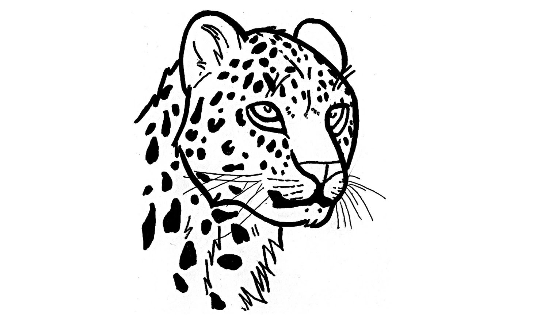 Desenhos De Onca Pintada