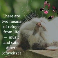 Albert Schweitzer: On Music and Cats