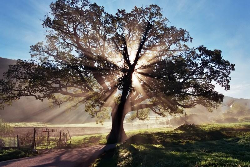 photo credit: photofarm.ning.com