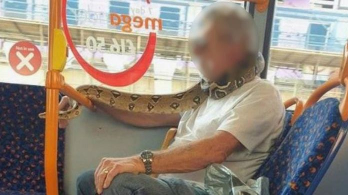 Snake used as face mask on bus [photo] 1