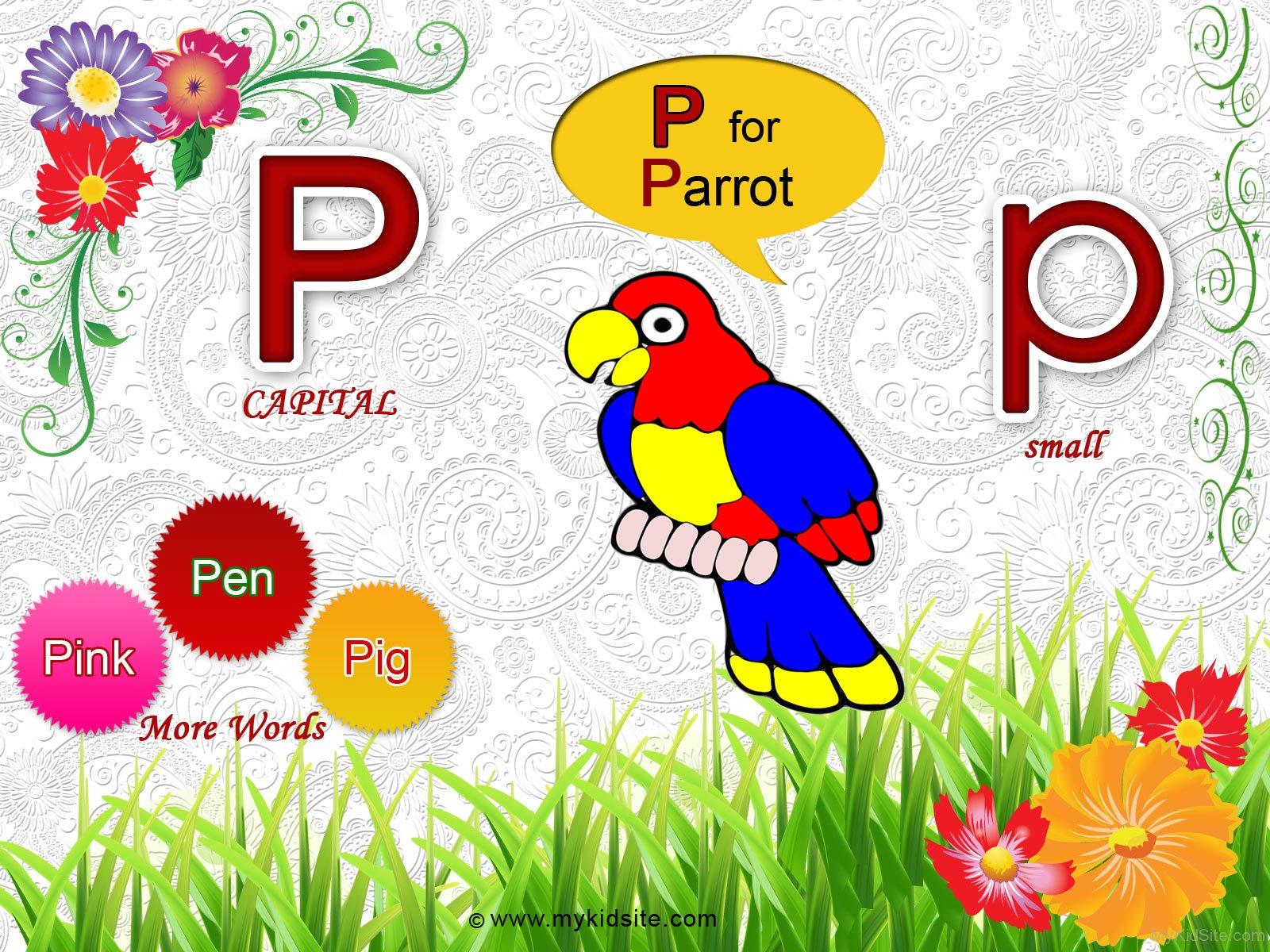 Alphabet P For Parrot