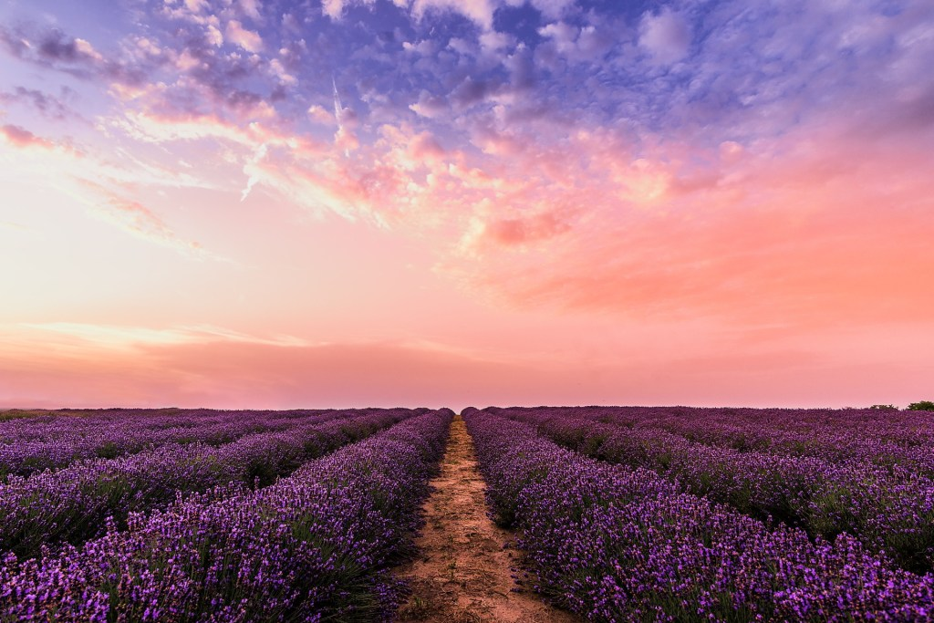 My kind of Zen – Lavender plantation