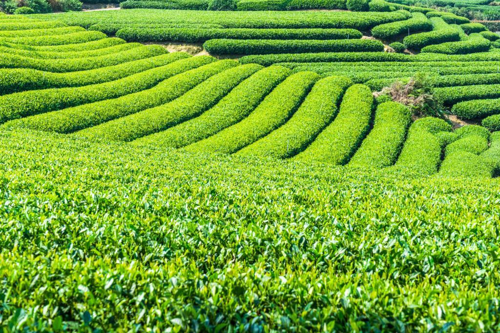 My kind of Zen – Tea Tree Essential Oil